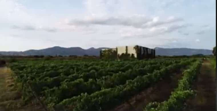 Vignerons Independientes de Huesca – Las Bodegas